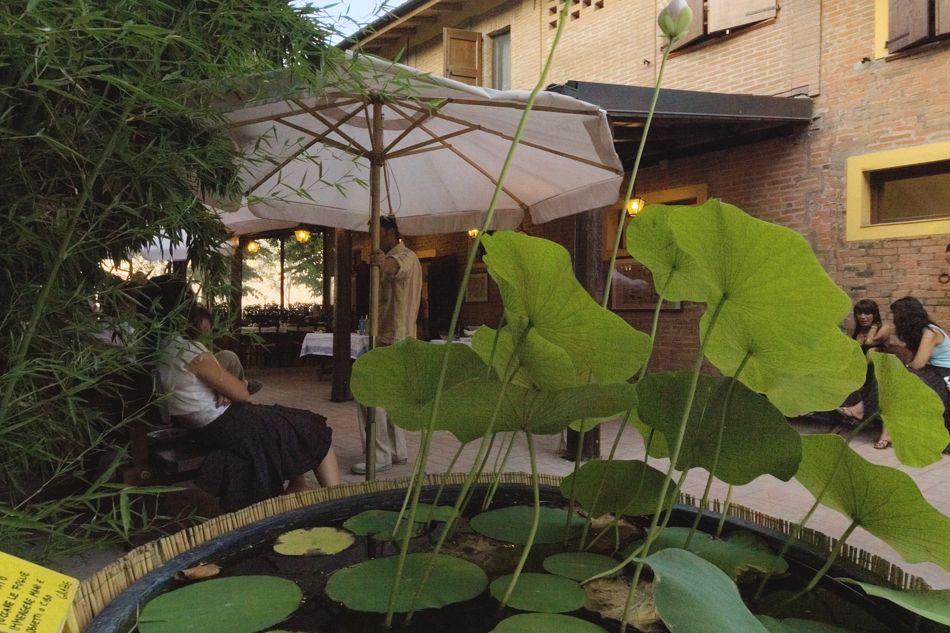 fiore-di-loto-di-fianco-alla-veranda